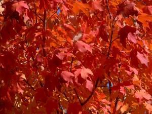autunno nella gamma dei colori