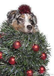 curiosità cane di Natale